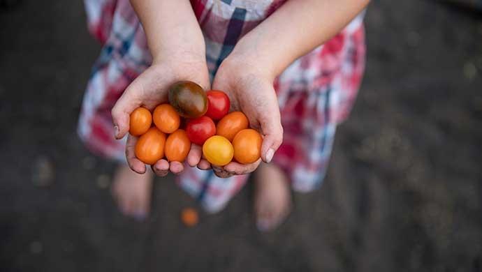 Fomentar el consumo de productos naturales y evitar los alimentos ultraprocesados  - Compartir en Familia